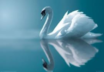 how wonderful you are swan pictue