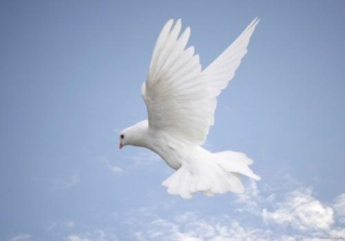 dove in sky